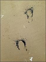 Spuren im Sand 3