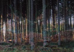 Waldraunen, 2014