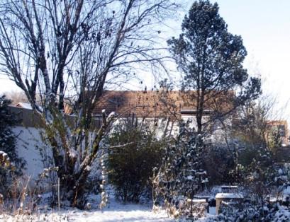 Der Baum, Winter 2013