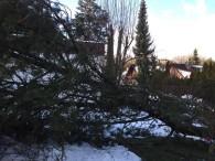 Der gefallene Baum 2, 2015