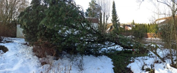 Der gefallene Baum, 2015
