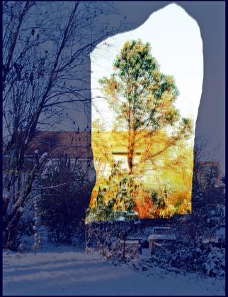 Requiem for a fallen tree 4, 2015