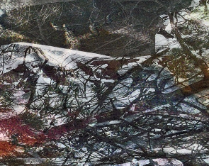 The fallen tree 3, 2015