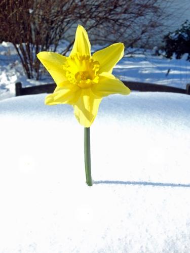 Sehnsucht nach Frühling800