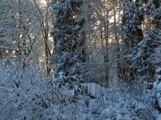 Winterzauber, 2015