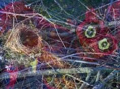 Das Nest 4web, 2015