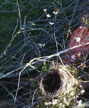 Das Nest noch einmalweb