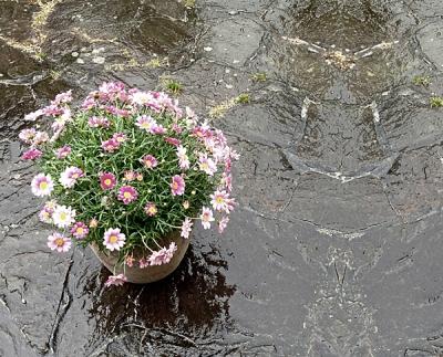 Im Frühlingsregen 9 deweb