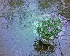 Im Fruhlingsregen 9b, 2015