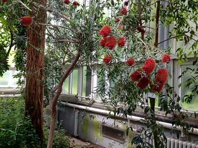 Botanischer Garten Berlin 2, 2015