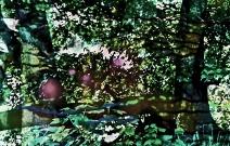 Tegeler Forst 2cd Froschlied web