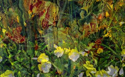 Dschungelig1, D10, 2015