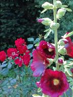 Im Gartendschungel 6 web