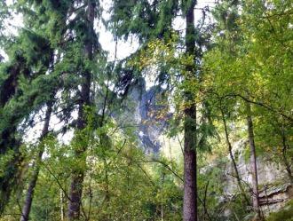 Hinter Bäumen versteckt, 2015