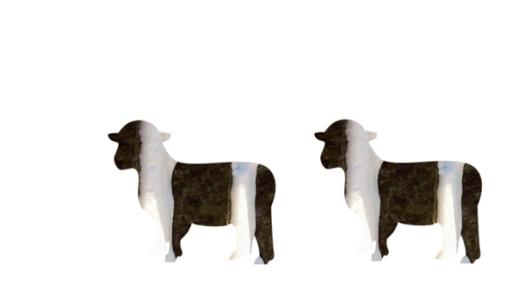 Schafe, Weiß und Braun b web, 2016