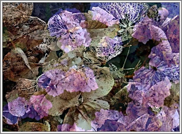 Blühen und verblühen 1 Rweb