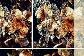 Verblüht Collage 3du