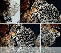 Verblüht Collage5
