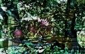Tegeler-Forst Froschlied- 2015