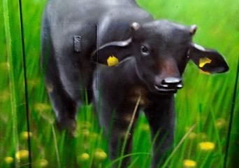 Wo sind die Büffel?1, 2015