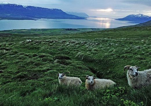 Island Mitternachtssonne am Fjord 4 2018 web .jpg
