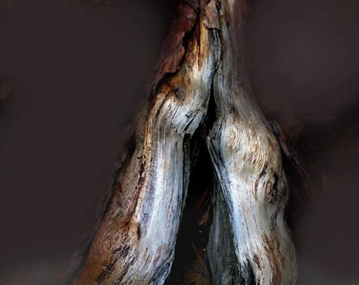Gut Holz D1bweb