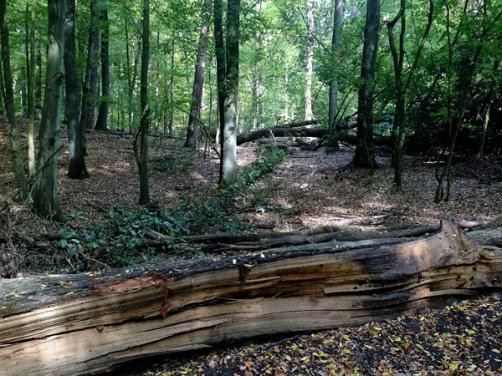 Herbstwald in Berlin 06web