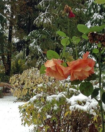 Erster Schnee im Oktober 5b 2018 web1-stellige Seriennummer