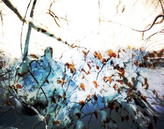 der Frühling kommt bestimmt 3bweb